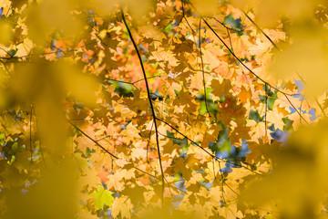 Arbol y amarillos /Yellow tree