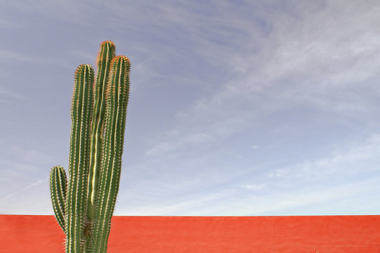 Mexican cactus against red wall