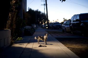 Dog in pool of light on a dark street at dusk Fotomurales