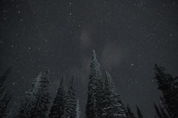 Big White Stars IV