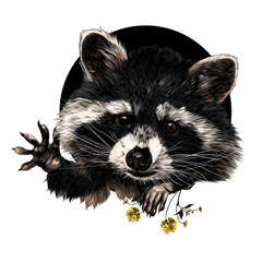 raccoon sketch vector graphics front side is a color picture