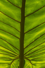 Closeup of bright green leaf from a palm tree