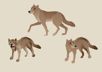 Wolves vector set, isolated illustration