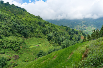 Summer landscape with green rice terraces and forest