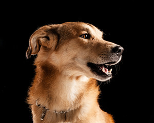 Crossbred Dog's Portrait