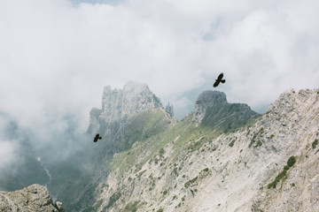Two birds flying on top of the mountain