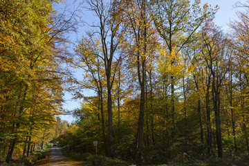 autumn forest in indian summer colors
