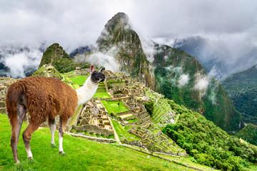 Fotorolgordijn Lama Machu Picchu, Cusco - Peru