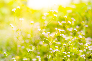 Poster Jaune blurred grass flowers backgrounds