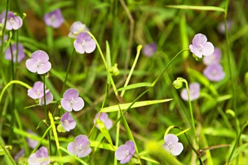 The grass is blossoming./Purple flowers are blooming. Insect pests to pollinate the natural scene.