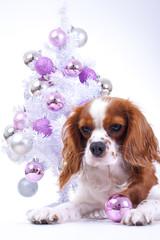 Christmas animal christmas dog pet photo. Celebrate christmas with cute puppy dog. White background.