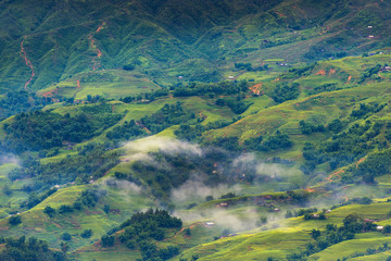Landscape of land field and rice terrace at Sapa, Vietnam