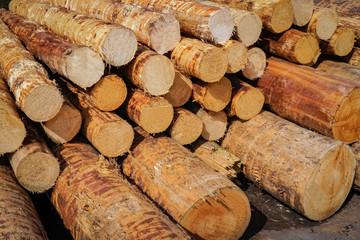 Forstwirtschaft - entrindete Baumstämme im Sägewerk