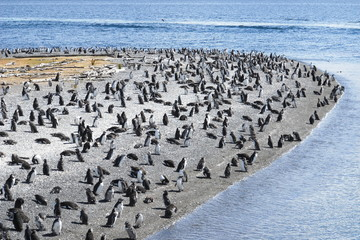 Magellanic Penguins in the Beagle Channel, Ushuaia, Argentina
