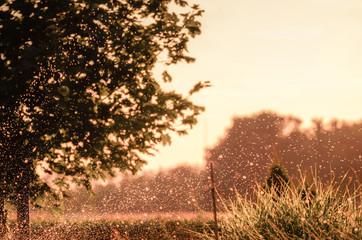 Autumn raindrops at sunset in the garden.