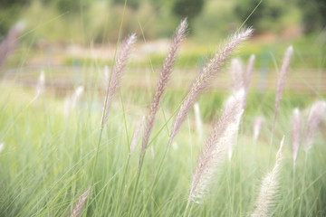 Closeup nature view of grass on blurred background