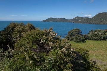 Bay of Plenty New Zealand
