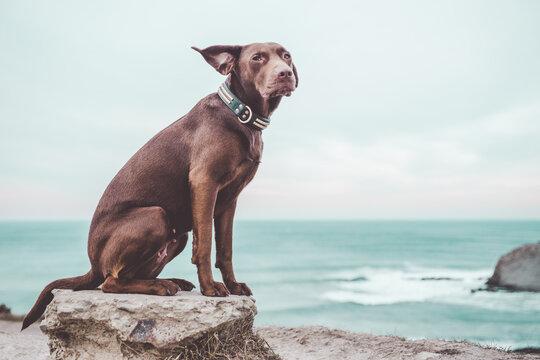 Dog on rock