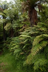 Forest North Island New Zealand