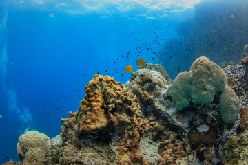 Underwater background with coral reef