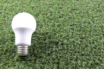 電球と芝生