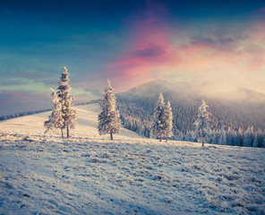 Great winter sunrise in Carpathian mountains with snow covered fir trees