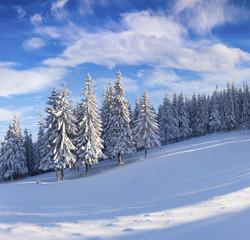 Sunny winter wiev in snowy mountain forest