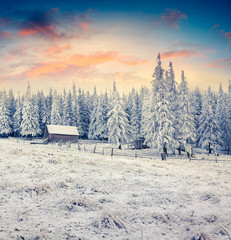 Fantastic winter sunrise in Carpathian abandoned village with snow covered grass and fir trees.