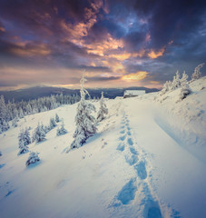 Dramatic winter sunset in Carpathian mountains with snow cowered fit trees.