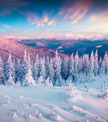 Fantastic winter sunrise in Carpathian mountains with snow cowered trees.