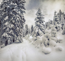 Retro style winter view in Carpathian mountains