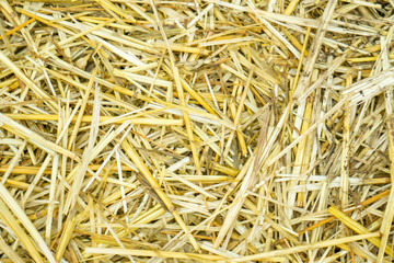 Dry yellow straw grass background texture after havest