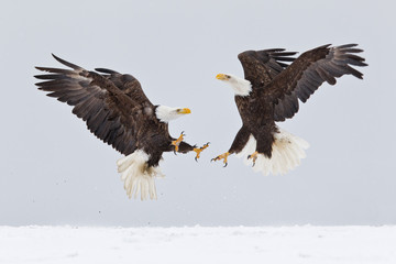 Bald eagles fighting in the air with snow on the ground in Alaska