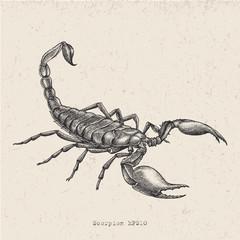 Vintage scorpion hand drawing