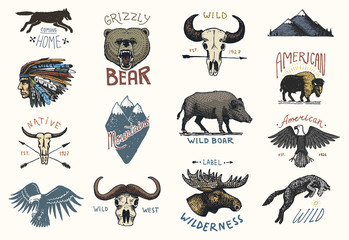 set of engraved vintage, hand drawn, old, labels or badges for camping, hiking, hunting with boar, bear and wolf, red fox . skull and bald eagle, moose face, indian or native american. buffalo