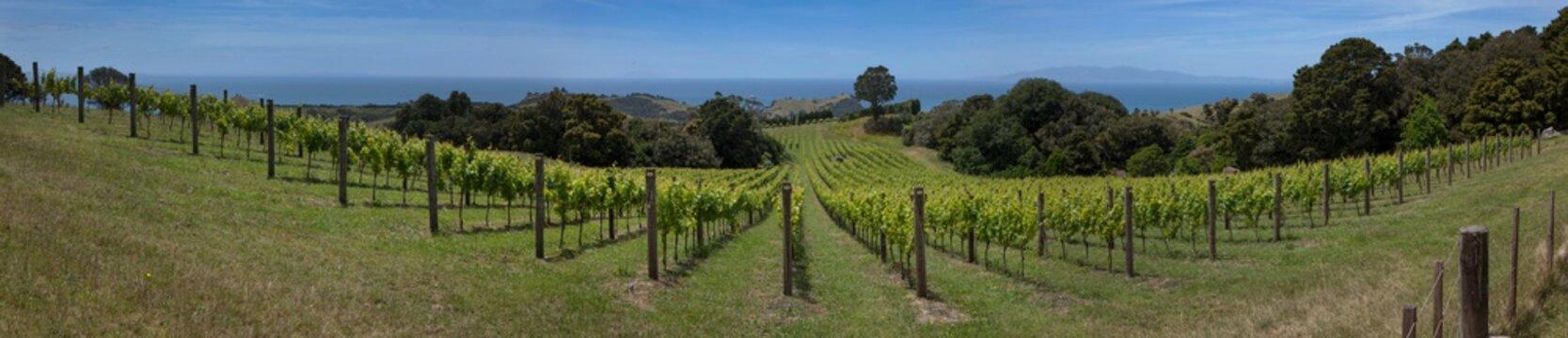 Vineyard Waiheke Island Auckland