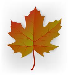Autumn leaf. Leaf isolated on a white background. Autumn maple leaf. Vector
