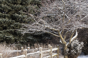 A dusting of snow on evergrees and a crabapple tree in the corner of a garden defined by a splitrail fence in Wisconsin.