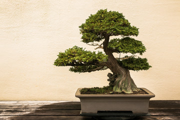 Tuinposter Bonsai Bonsai at National Arboretum