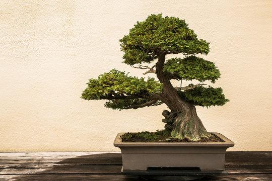 Bonsai at National Arboretum