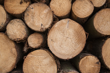 close up at pine timber on the stock