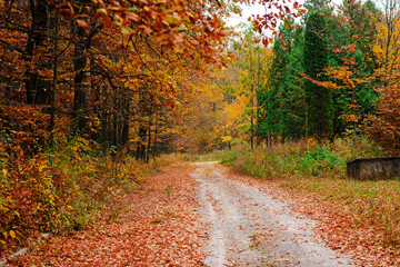 Bright and colorful landscape of sunny autumn forest with trail and stone bloc on the side of way