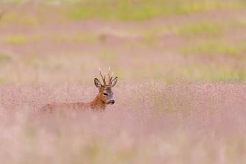 Wall Mural - Deer and purple herbs