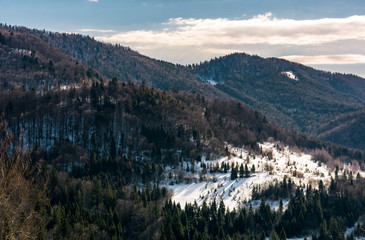snow covered meadow among forest on hillside. beautiful nature scenery in winter in mountains