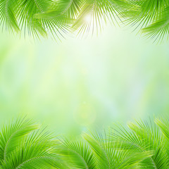 Misty morning in the tropical forest, Abstract palm leaves and natural backgrounds.