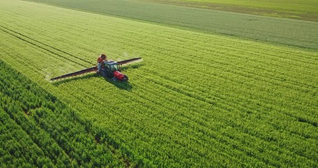 Wall Mural - Drone aerial shot of a farmer spraying green wheat field