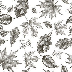 Decorative seamless pattern with Ink hand drawn autumn maple and oak leaves. Botanical elements texture for your design. Vector illustration.