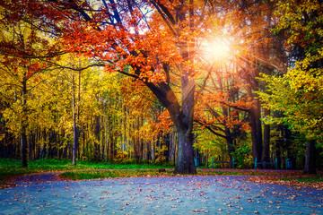Yellow colors in autumn park. Landscape of colorful trees in central park. Scenery autumn at sunset. sun rays through branches.