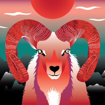 Aries - Widder