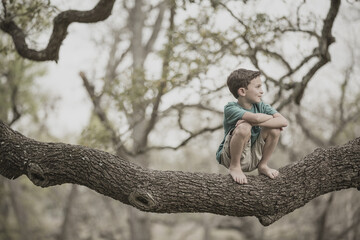 Mixed race boy crouching on tree branch